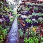 Bratang Flower Market, Surabaya